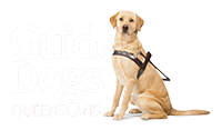guide dogs queensland